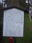 安産杉2.JPG
