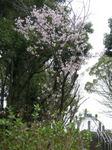 港南台北公園2010さくら13.JPG
