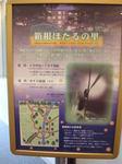 箱根ホテル小涌園2-17.JPG