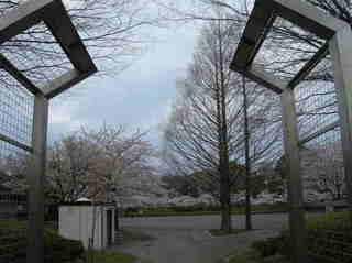 港南台北公園 2012 さくら03.JPG