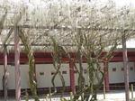 笠間稲荷神社7.JPG