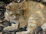 江の島の猫.JPG