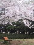 港南台北公園top.jpg