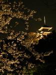 三溪園 観桜の夕べ2010-top.JPG