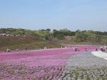 市貝町芝桜公園top.JPG