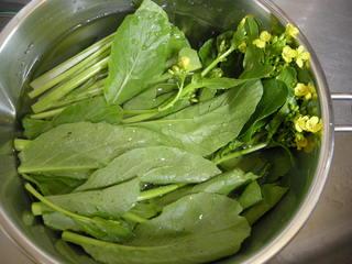 菜の花の茹で方01.JPG