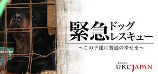 UKC JAPAN.jpg